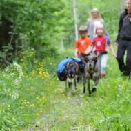 Nystedts Huskey hundar i förgrunden på stig i skogen på sommaren med en familj bakom