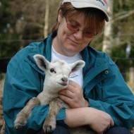 Kvinna med keps som håller i ett lamm
