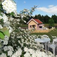Gult hus med vita blommor i förrunden